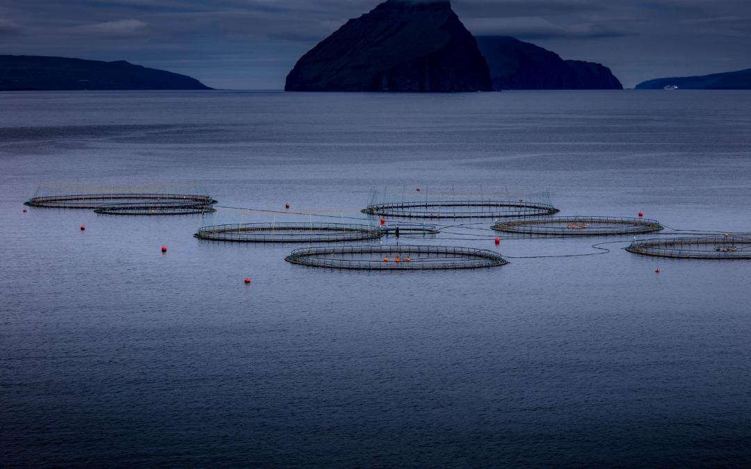 L'impatto del Covid-19 sul settore dell'acquacoltura